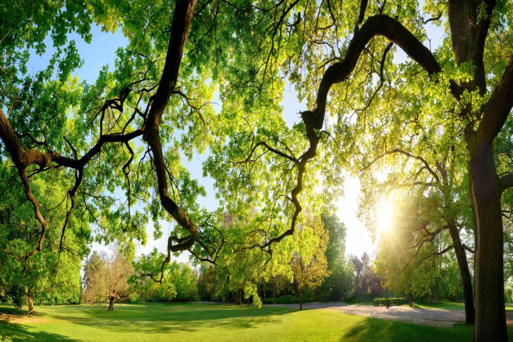 Businesspark Rivium – midden in een groene oase